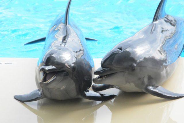 イルカにさわれる美ら海水族館で思い出作りを