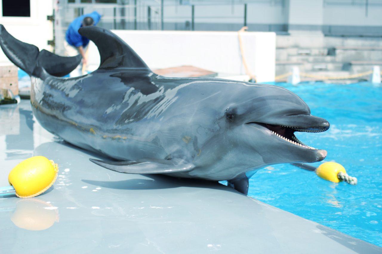 【美ら海水族館でイルカに触れる】10月から始まる新プログラム詳細は?