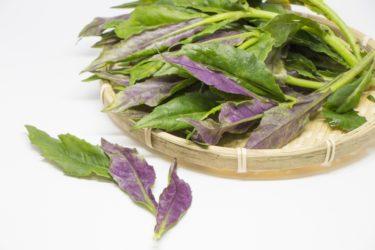 【ハンダマの栄養素】沖縄の伝統野菜で血がキレイになる?女性に嬉しい成分って?