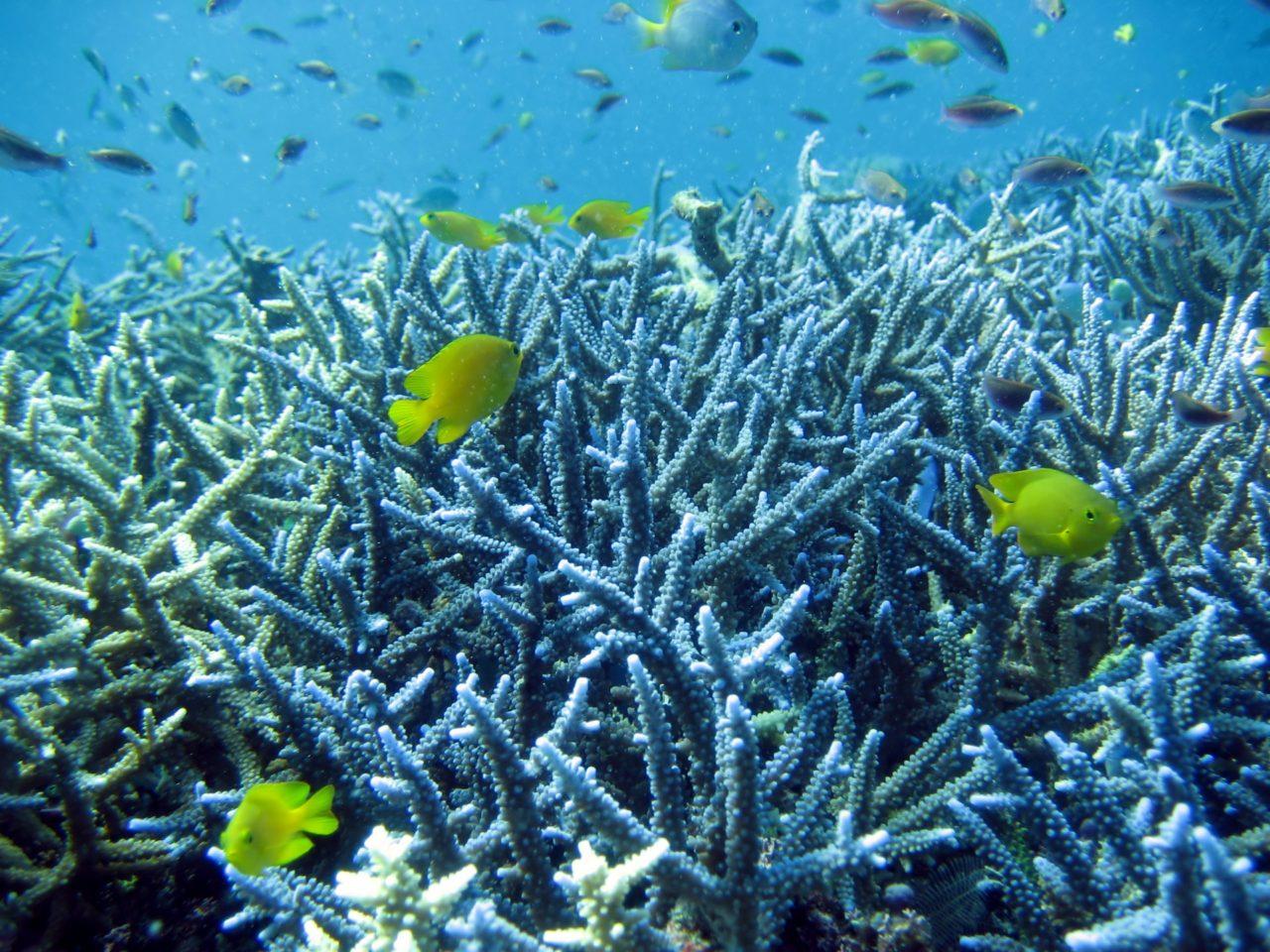【沖縄にしかいない魚や甲殻類・貝類】って?美ら海水族館で観られるかも調べてみました!