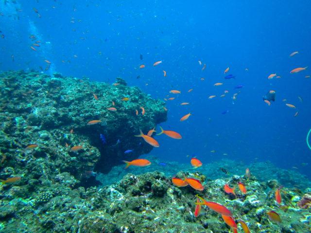ギョギョギョ!沖縄にしかいない魚って?美ら海水族館で観られる?