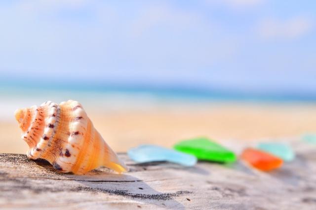 沖縄にしかいない貝類って?美ら海水族館で観られる?