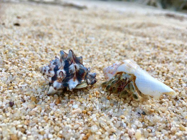 沖縄にしかいない甲殻類って?美ら海水族館で観られる?