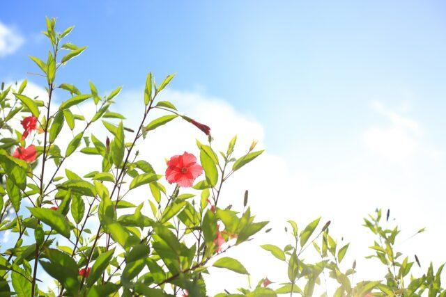 沖縄移住は最高!な人のおすすめポイント